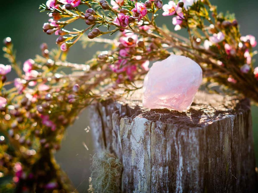 rose-quartz-on-stump